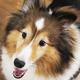 Dog Salon Rapt